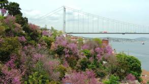 İstanbul Avrupa Yakasındaki En Yaşlı 10 Çınar
